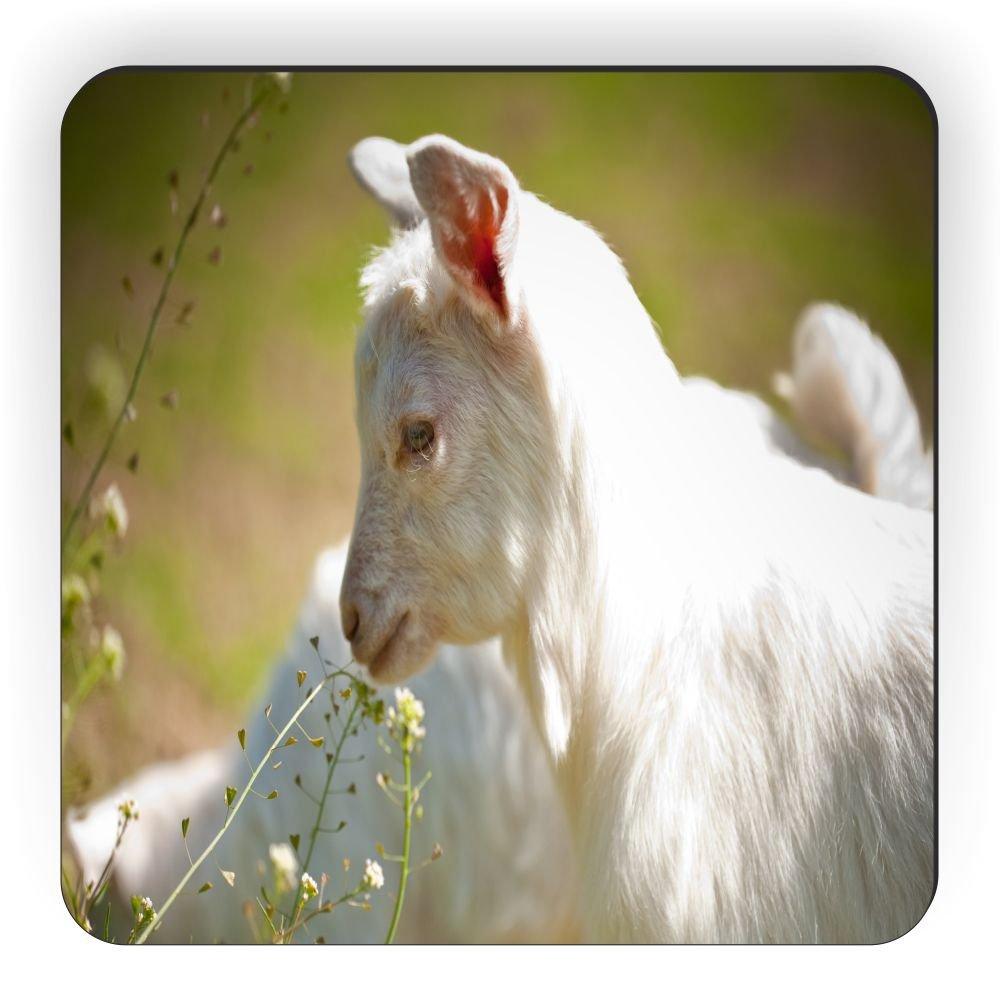 Rikki Knight Baby Goat Closeup Design Square Fridge Magnet White