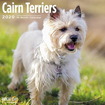 Amazon Com 2020 Cairn Terriers Wall Calendar By Bright Day 16 Month 12 X 12 Inch Cute Dogs Puppy Animals Skye Office Products
