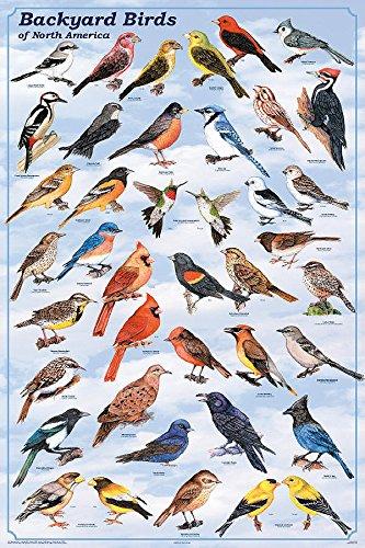 backyard birds of north america - 6