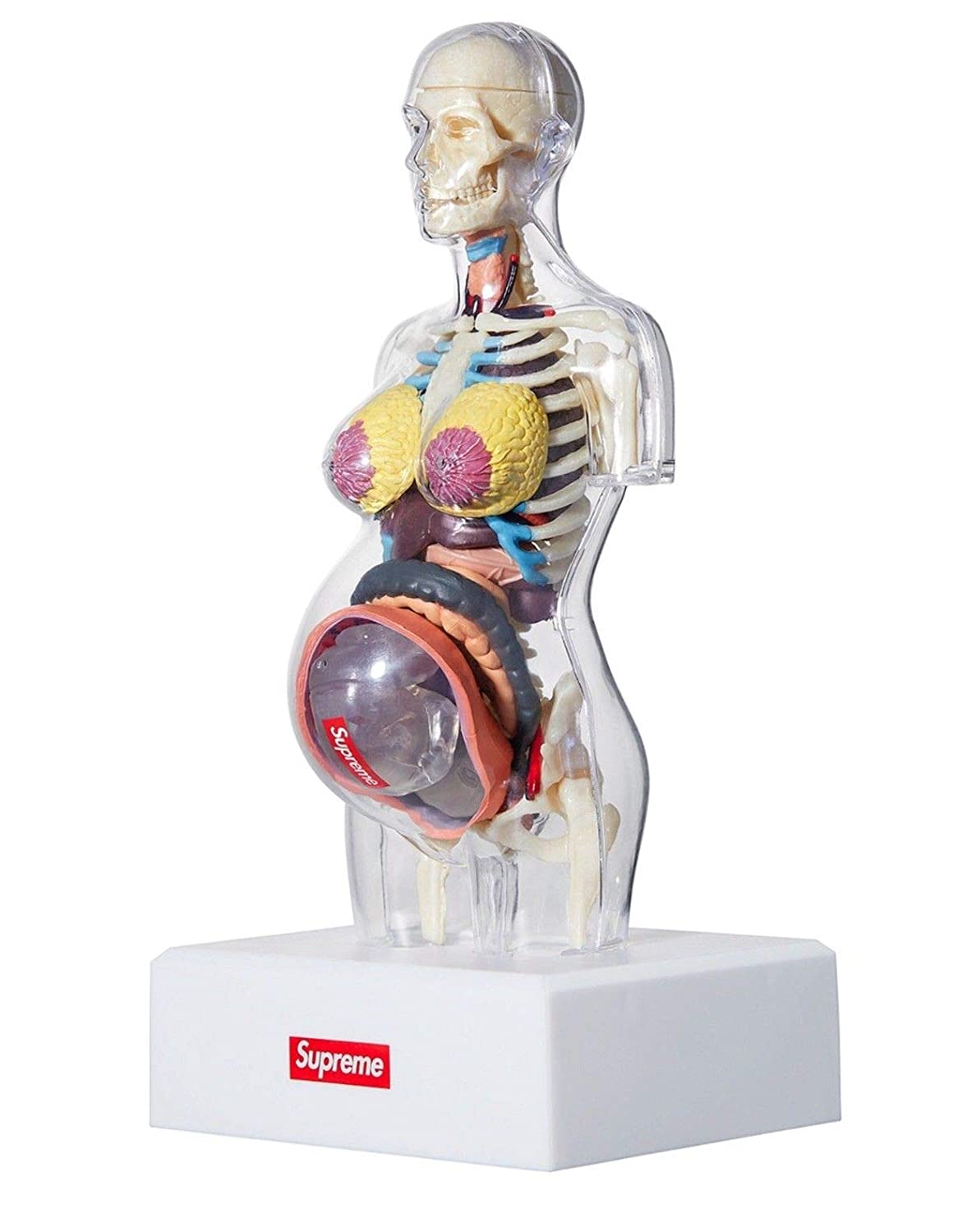 Supreme Fw18 Female Anatomy Model 100 Authentic Real Amazon