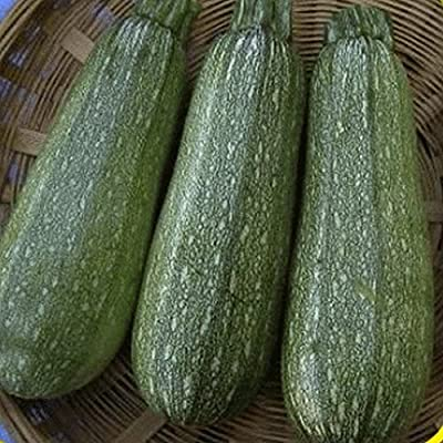 Everwilde Farms - Gray Zucchini Summer Squash Seeds - Gold Vault