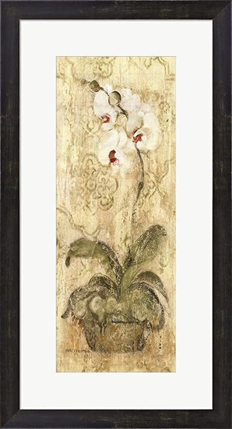 Amazon.com: Esprit Phalaenopsis Panel by Cheri Blum Framed Art Print ...