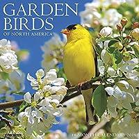 Garden Birds 2019 Wall Calendar