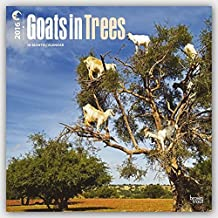 Goats in Trees 2016 Square 12x12 (Multilingual Edition) by Browntrout Publishers (2015-07-15)