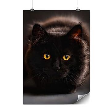 Photos noir chatte