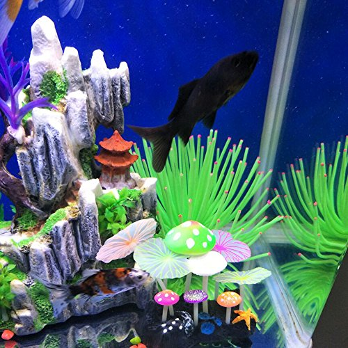Buy environment for betta fish