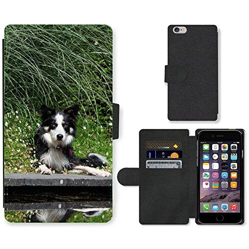 "Just Phone Cases PU Leather Flip Custodia Protettiva Case Cover per // M00128621 Border Collie de jardins d'eau Chien // Apple iPhone 6 PLUS 5.5"""