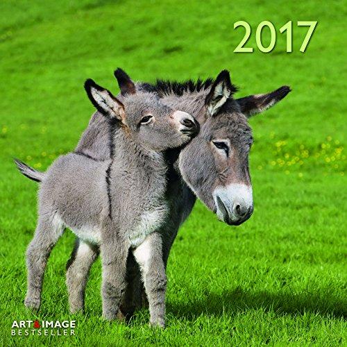 2017 Donkey Calendar
