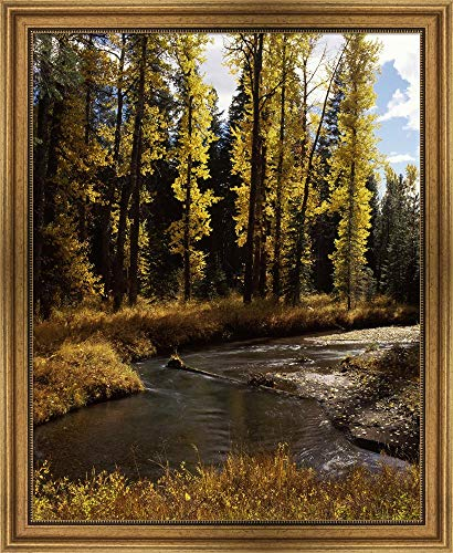 Cottonwood Trees Along Annie Creek Canyon Trail, Crater Lake National Park, Oregon, USA by Panoramic Images Framed Art Print Wall Picture, Wide Gold Frame, 27 x 33 ()