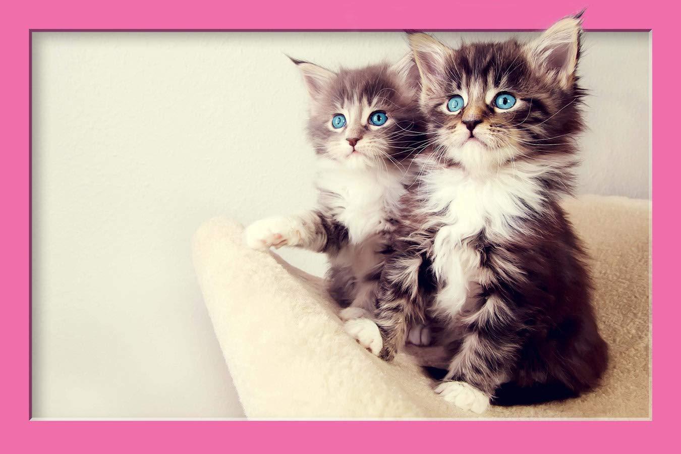 Cute Lovely Grey Kitten (Copy)