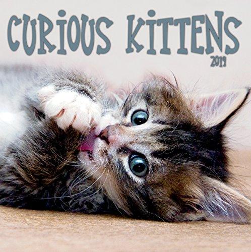 espátula Photo Curious Kittens 2019 - Calendario de pared para gatitos (199989500040)