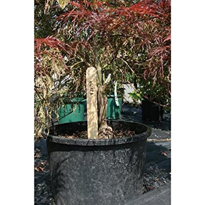 Orange Coated Wood Garden Stakes - Case of 250