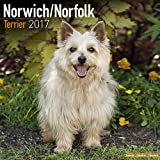 Norwich Terrier Calendar 2017 - Norfolk Terrier - Dog Breed Calendars - 2016 - 2017 wall calendars - 16 Month by Avonside
