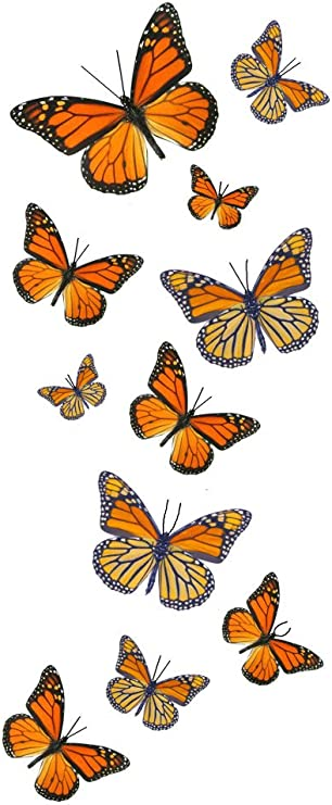Amazon Com 55 Monarch Butterfly Temporary Tattoos Health Personal Care