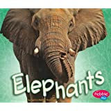 Elephants (African Animals)