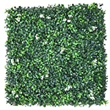Porpora Boxwood Topiary Hedge Plant , Suitable for Both Outdoor or Indoor use, Garden, Backyard , Boxwood with white Flower 20 x 20 Inch (12 pack)