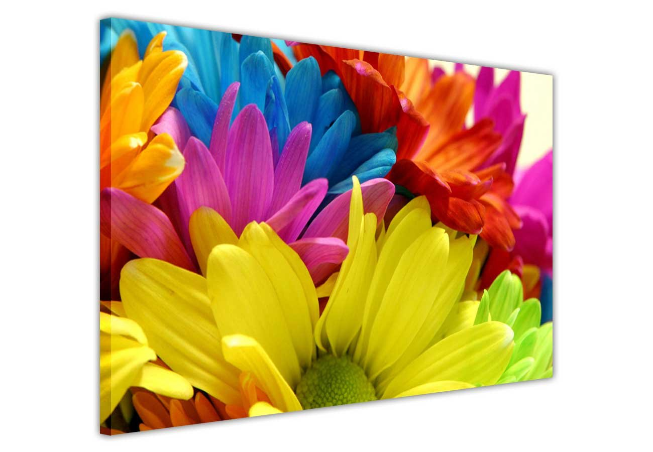 FLORAL CANVAS WALL ART PRINTS RAINBOW COLOUR DAISIES FLOWERS ...