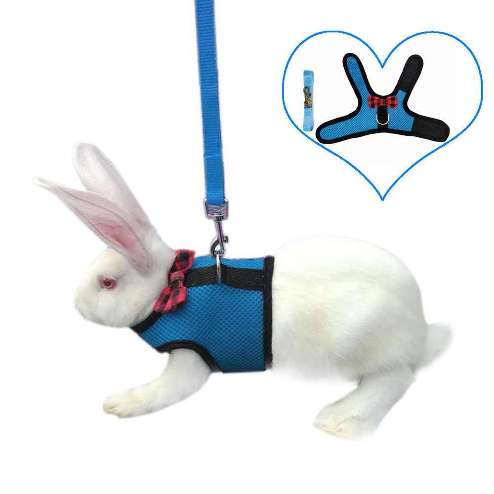 Amazon.com : Rabbit Harness with Leash Adjustable Soft Elastic Mesh