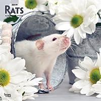 Rats 2019 Square Wall Calendar