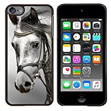 Graphic4You Gray Head Horse Animal Design Thin Slim Rigid Hard Case Cover for Apple iPod Touch 6