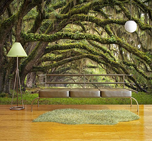 wall26 - Oaks Avenue Charleston Sc Plantation Live Oak Trees Forest Landscape in Ace Basin South Carolina Lowcountry - Removable Wall Mural | Self-adhesive Large Wallpaper - 100x144 - Charleston The Market Sc