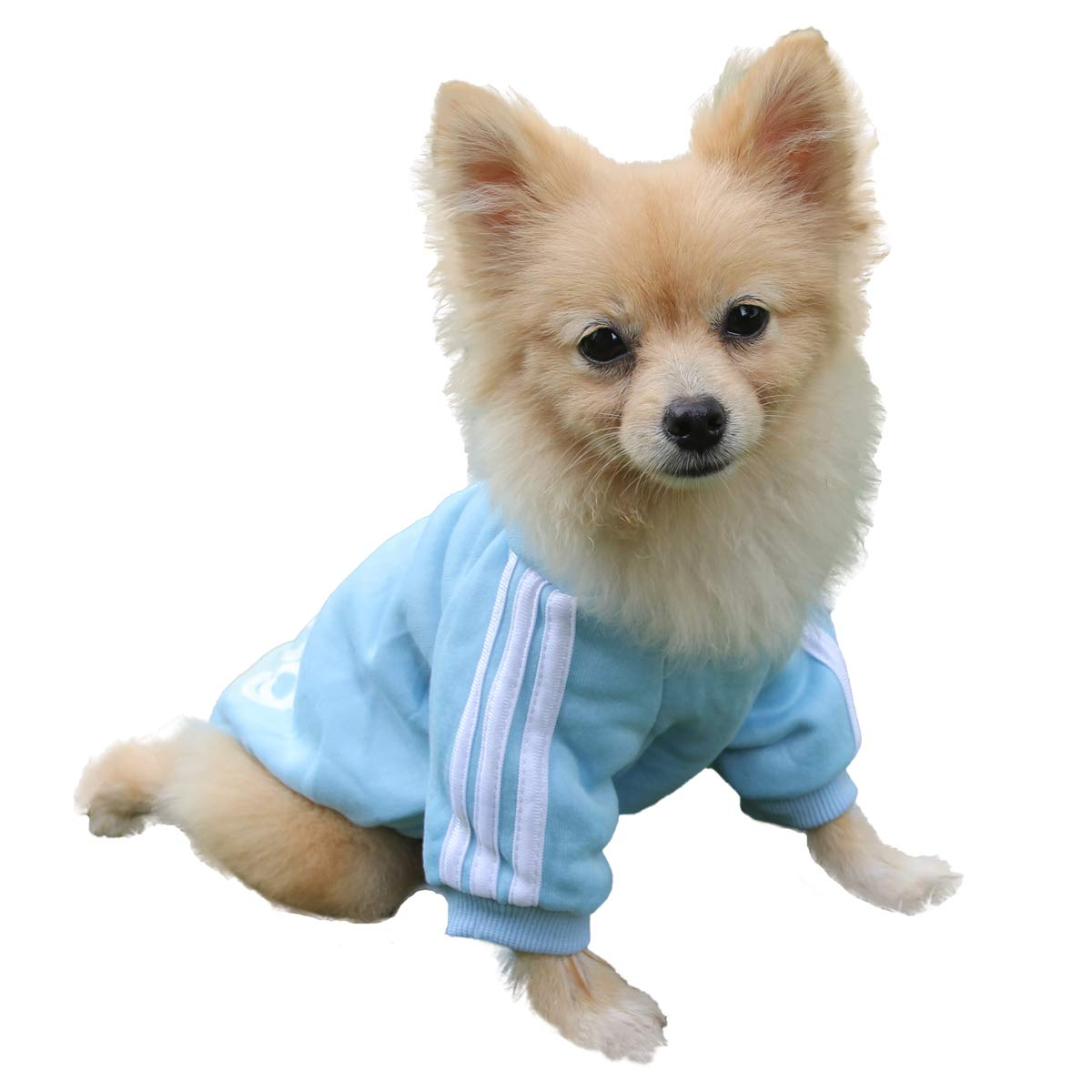 QiCheng& LYS AD. Dog Chien Capuche Vêtements, pour Animal Domestique Chiot Chat Mignon Coton Chaud Capuche Manteau Pull
