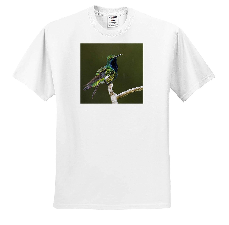 Adult T-Shirt XL 3dRose Danita Delimont ts/_313002 Black-Throated Mango Hummingbird Hummingbird