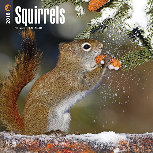 Squirrels 2018 12 x 12 Inch Monthly Square Wall Calendar, Wildlife Domestic Animals (Multilingual Edition)