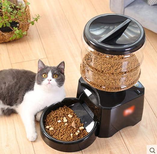 Kitten suministra tiempo de alimentación automática alimento para ...