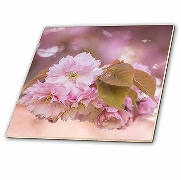 3drose uta naumann fotografa flores rosa de sakura de cerezo azulejos - Azulejos Rosa