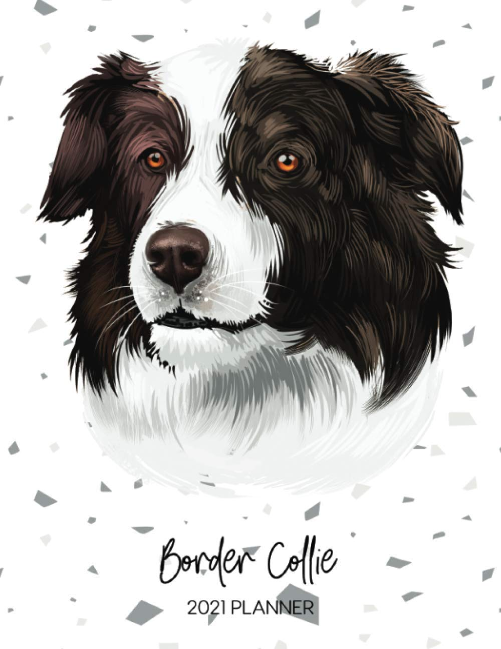 border collie dating