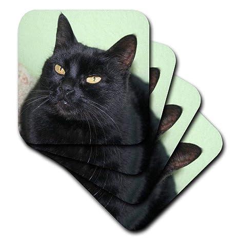 Taiche fotografía de – diseño de gatos – gato negro retrato un negro gato posando contra