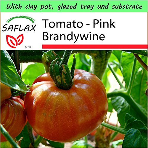 SAFLAX - Garden to Go - Tomato - Pink Brandywine - 10 seeds - Lycopersicon esculentum (Tomato Brandywine Pink)