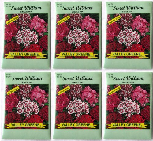 valley-greene-6-pack-175-mg-package-sweet-william-single-mix-heirloom-variety-seeds