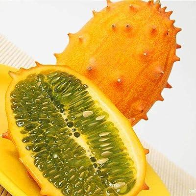 Mandii 30Pcs Cucumis Metuliferus Heirloom African Horned Melon Seeds Fruits : Garden & Outdoor