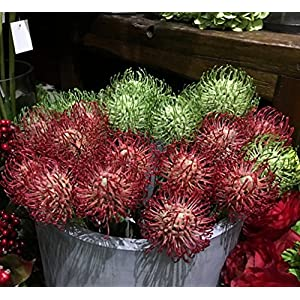Skyseen 3PCS Artificial Pincushion Flower Fake Leucospermum Nutans Needle Protea Cynaroides,Red 114