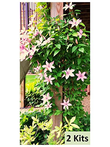 The Scroll Trellis Garden Trellis is 9 feet long. It is sold as a kit, to easily grow a natural vertical green wall, create privacy or camouflage an eyesore and attract pollinators! (1)