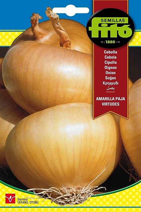 Semillas Fitó 44 - Semillas de Cebolla Amarilla Paja Virtudes ...