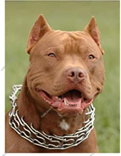 Buy American Pit Bull Book Online at Low Prices in India | American
