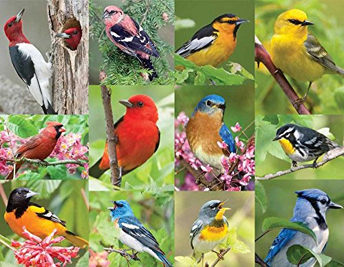 Springbok Alzheimer & Dementia Jigsaw Puzzles - Birds of a Feather - 36 Piece Jigsaw Puzzle - Large 18 Inches by 23.5 Inches Puzzle - Made in USA - Extra Large Easy Grip Pieces]()