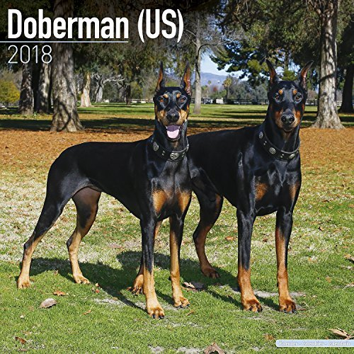 Doberman Calendar 2018 - Dog Breed Calendar - Premium Wall Calendar 2017-2018