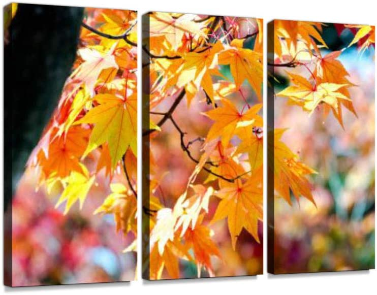 Amazon Com Yellow Maple Tree In Autumn Season Branch Bright Colors Print On Canvas Wall Artwork Modern Photography Home Decor Unique Pattern Stretched And Framed 3 Piece With Frame Posters Prints
