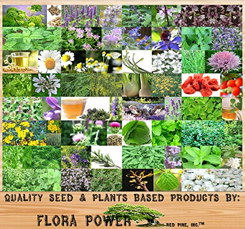 32 Types Medicinal & Culinary Herb Combo, Seeds - from Angelica to Yarrow- Seeds from Flora Power by Red Pine, Inc.