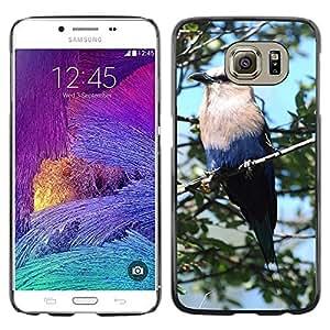 Etui Housse Coque de Protection Cover Rigide pour // M00115003 Azul Hinchada Roller Pájaro rama de // Samsung Galaxy S6 (Not Fits S6 EDGE)