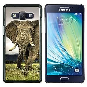 Cubierta protectora del caso de Shell Plástico || Samsung Galaxy A5 ( A5000 ) || Linda criatura Animal Elefante Majestic @XPTECH