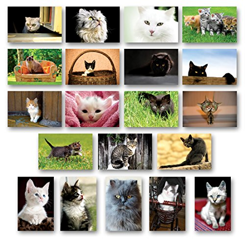 CATS and KITTENS Postcard Set of 20 Postcards. Cat and Kitten Post Card Variety Pack. Made in USA.
