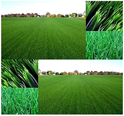 1 oz x Kentucky Bluegrass Seed - Lawn Grass Seeds - COOL SEASON GRASS - HARDY ZONES 1 - 8