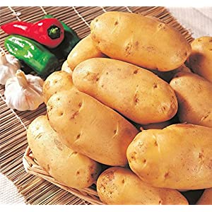 Mr.seeds 120 pcs Potato Seeds Anti-Wrinkle Nutrition Green Vegetable for Home Garden Planting Potato Seeds Absorbing…
