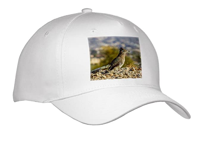 Amazon com: Danita Delimont - Birds - Greater Road Runner on