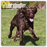Labradoodles 2018 12 x 12 Inch Monthly Square Wall Calendar, Animals Mixed Dog Breeds (English, French and German Edition)